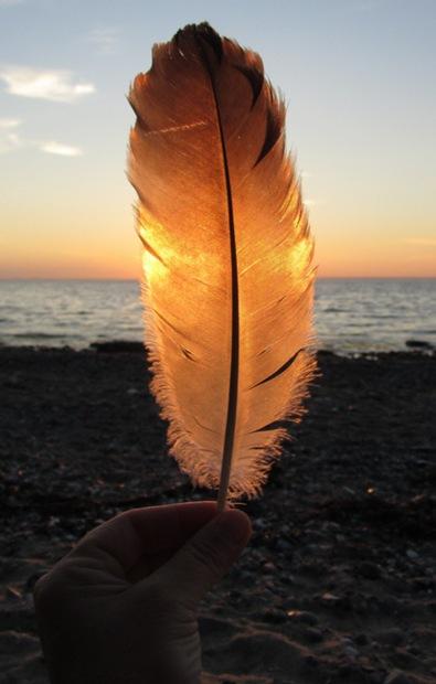Seeadlerfeder im Sonnenuntergang