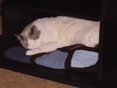 Truman napping in tv stand