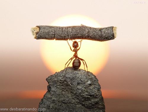 formigas inacreditaveis incriveis desbaratinando  (30)