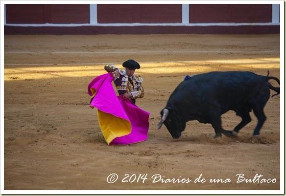 Toros 2014 (1)-14