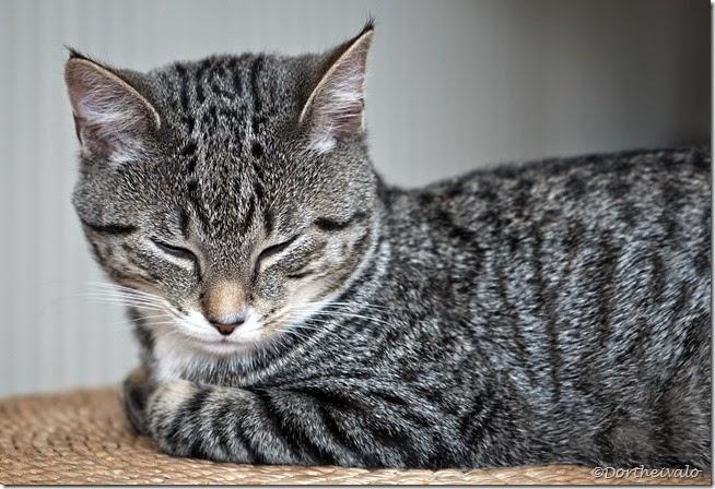kattens
