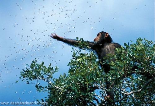 animais national geographic desbaratinando  (1)
