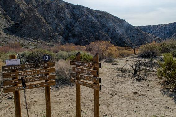 Big Morongo Canyon (8 of 63)