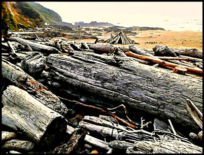 This beach is a driftwood picking beachcomber's dream come true.
