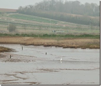 marshes from clyst bridge with little egret