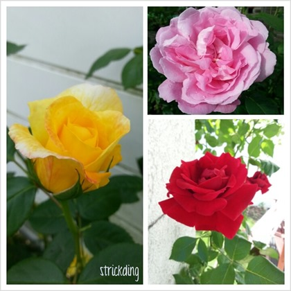 PhotoGrid_1371397057538