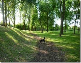 4 meg enjoys the shade newlands park