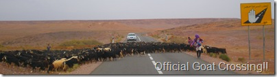 Goat Crossing in  Morocco