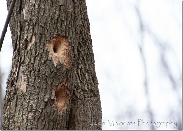 Day 70 - Dang Woodpeckers!