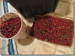cranberry bog 03