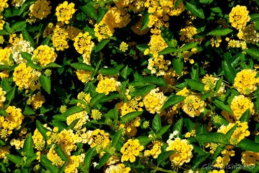 Glória Ishizaka - Flor amarela 38