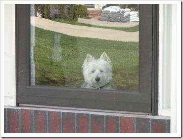 front door Yogi