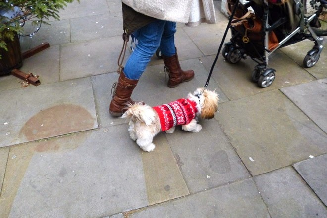 Собачка в жилетке на улице Бирмингема, Custard Factory