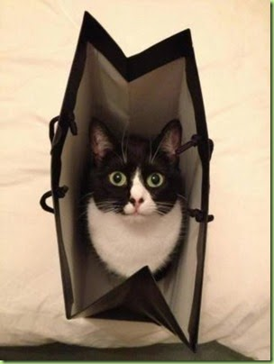 cat-in-bag-1408446619g4k8n