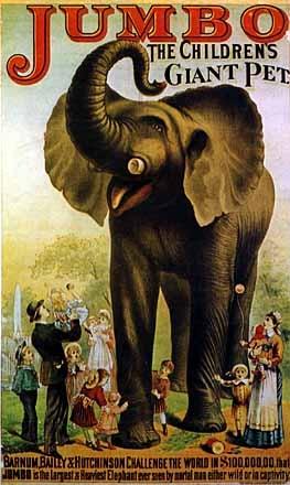 Jumbo - Giant Pet