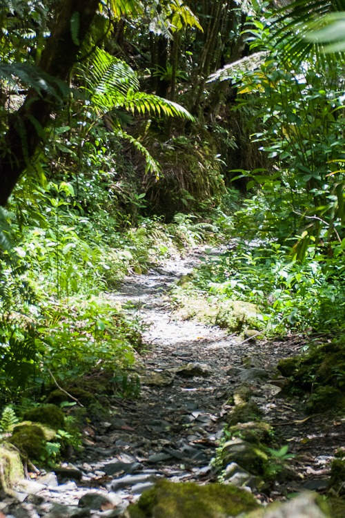 El Yunque Rainforest blog-27