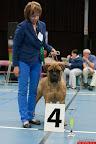 20130511-BMCN-Bullmastiff-Championship-Clubmatch-1789.jpg