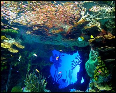 georgia aquarium6