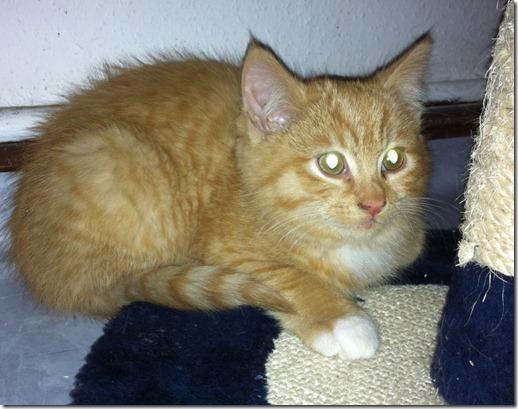 2011_12 Garfield (6)