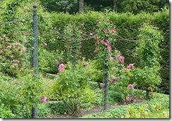 portmore rose poles