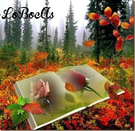 rosas-rosa-LoBocAs-1006