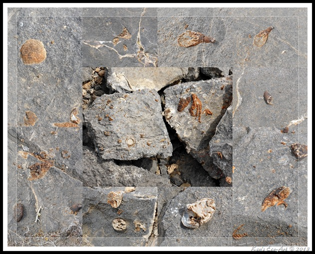 EFP-2013 Yucca Peak Fossils