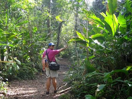 32. Prin jungla.JPG