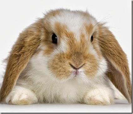 Malattia dentale del coniglio (Parte I)
