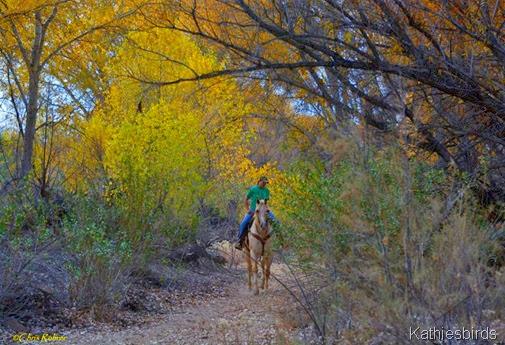 4. Horse n rider by CRohrer