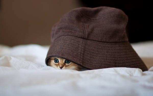 Os gatos não são muito bons em esconde-esconde 16