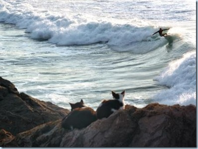 Surf Cats, San Sebastian SYcom