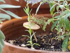 faerie mushroom d blog