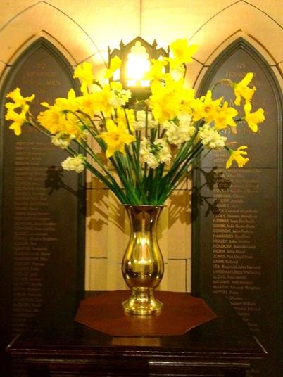 Robyn Daffodils