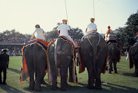 Playing Elephant Polo - Jaipur
