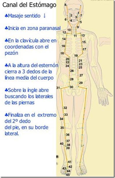 Canal del estómago en gráfico explicado
