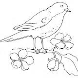 oiseau61.jpg