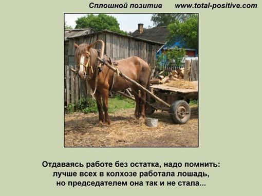 Лошадь председателем не стала