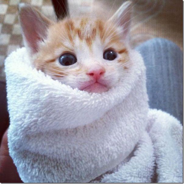 funny-animals-cute-21