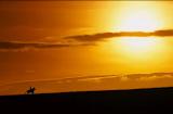 War-Horse.png