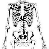 esqueletohhh.jpg