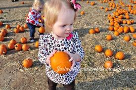 10-29-12_Pumpkin-Patch8