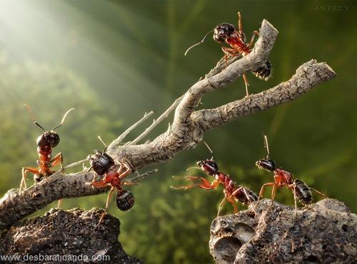 formigas inacreditaveis incriveis desbaratinando  (21)