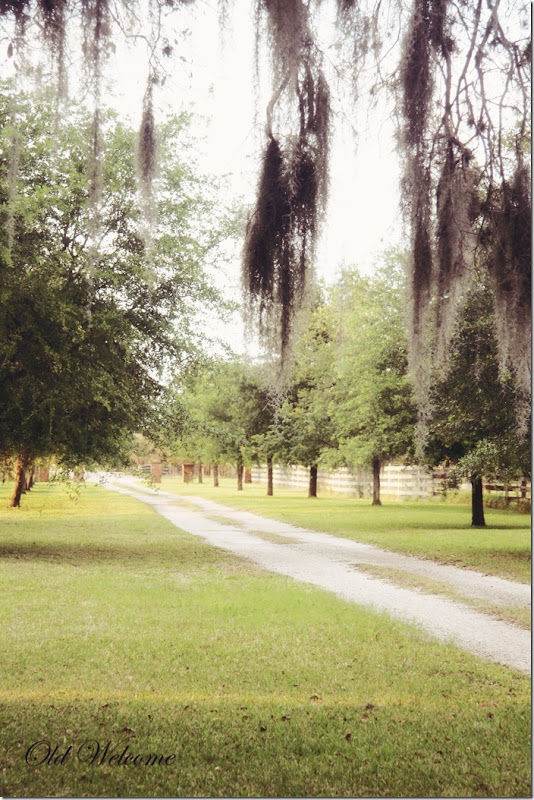 dirt lane live oak spanish moss old welcome