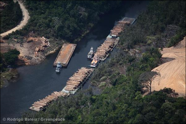 Aerial view of barges loaded with poaching timber in the tropical rainforest of Pará state, Brazil. Photo: Rodrigo Baléia / Greenpeace