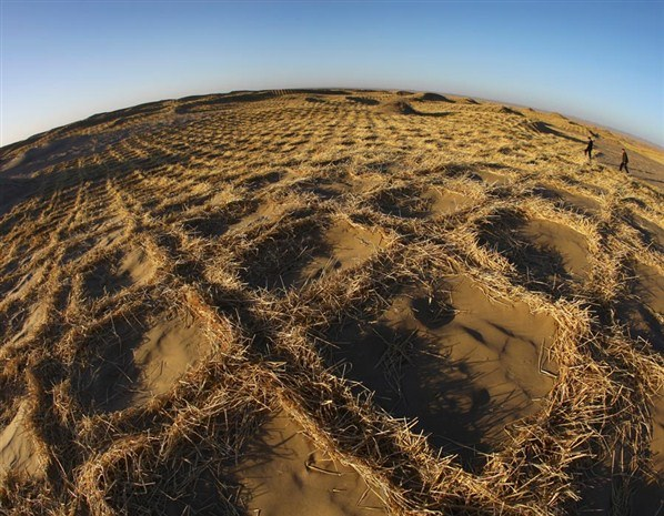 Officials from the China's Water Conservancy Bureau walk on the fringe of a desert, which has been planted with grass to prevent desertification, 8 December 2010. Photo: Reuters