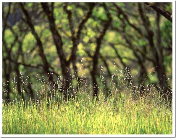 030608_carmel_grasses