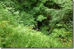 birks gorge