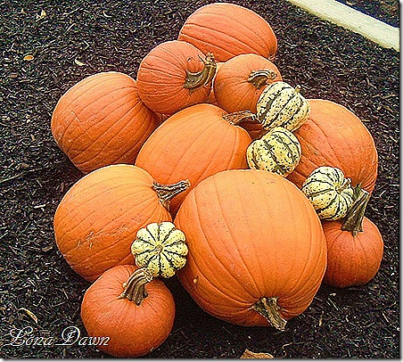 BE_Pumpkins_2011