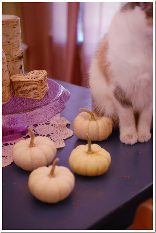 thanksgiving cats pumpkin