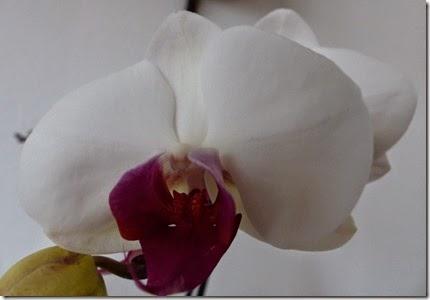 2015_04 Orchideen (5)